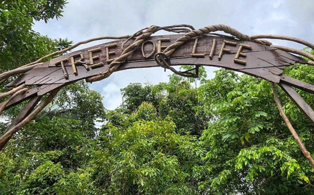 Tree of Life Peru