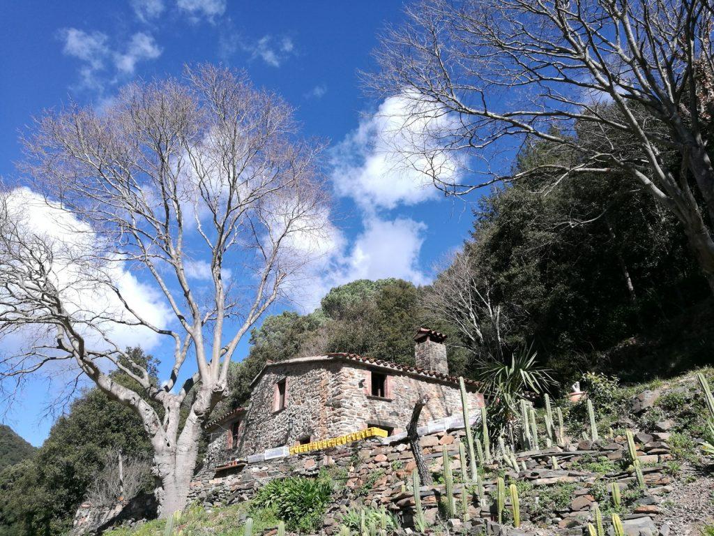 Magic Forest Montseny