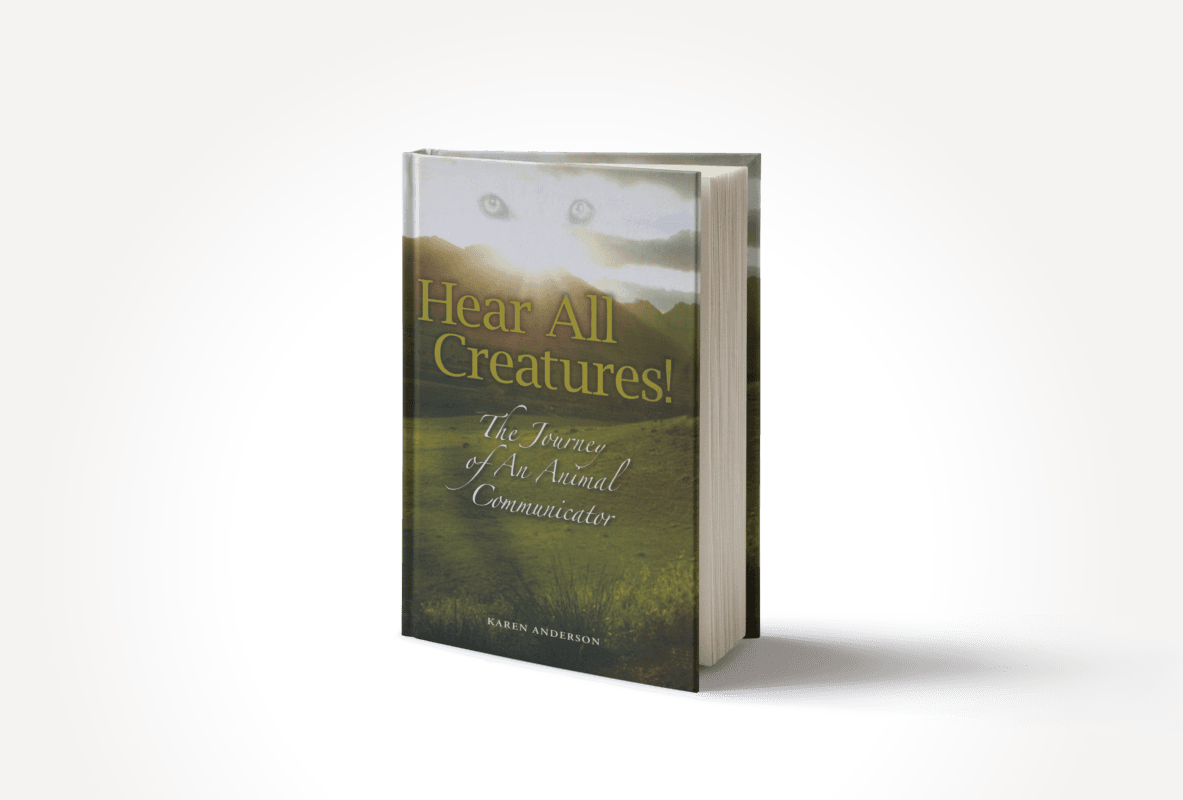 Afterlife Expert - Coach - Bestselling Author