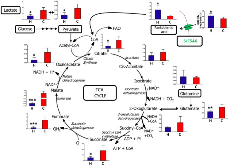 Detoxification, drainage and energy metabolism 1